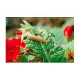 Nématode Ph 5 M anti-limaces lutte bio