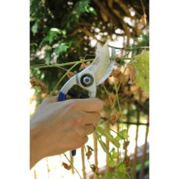 Sécateur arbre fruitier forgé 20 cm