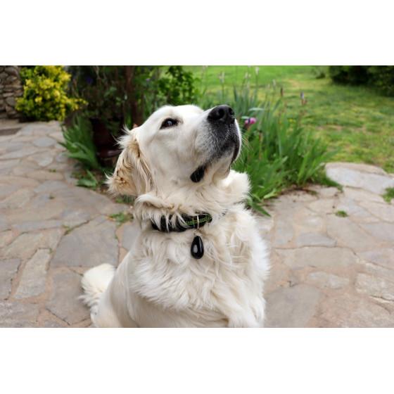 répulsif ultrason anti tique et puce pour chien et chat