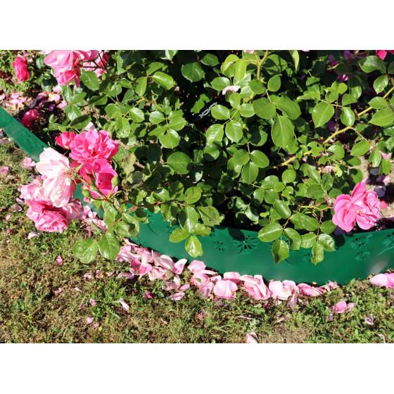 rosier à l'extérieur derrière bordure verte en plastique