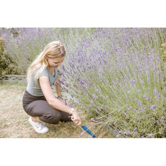 Jeune femme qui utilise la gouge à désherber près d'un plant de lavande