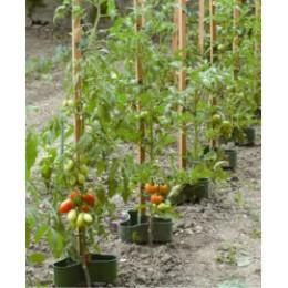 Réservoir d'eau goutte à goutte pour tuteur tomate (les 3)